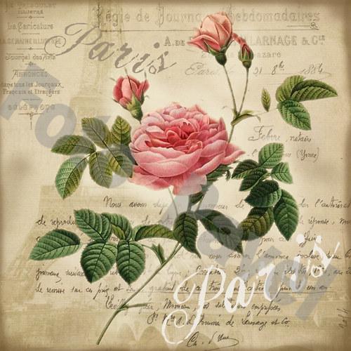 Vintage motiv - květiny - růže - Paříž
