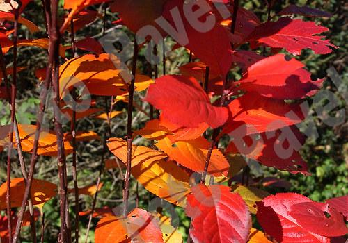 Barvy podzimu - Kokořínsko 6