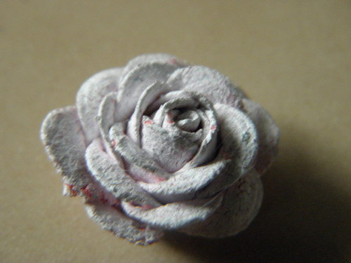 Starobylá růžička