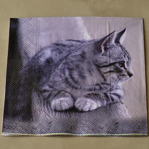 Ubrousek - Kotě