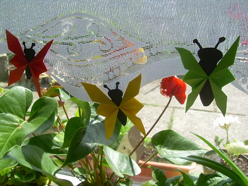 Motýlci 13x8