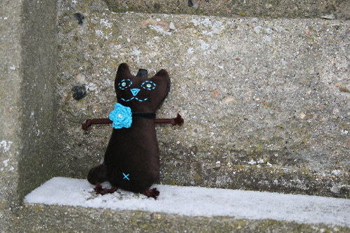 Kočička sametová s tyrkysovým květem