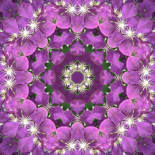 Mandala harmonického clematisu