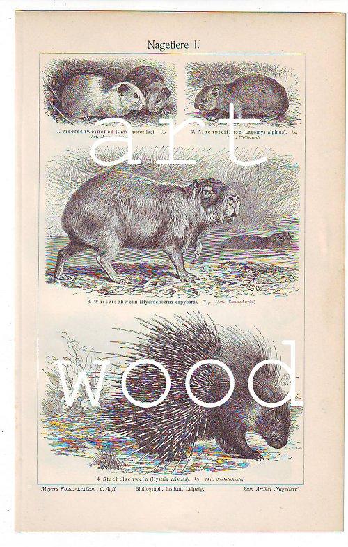 HLODAVCI - bobr, činčila, dikobraz...č.436