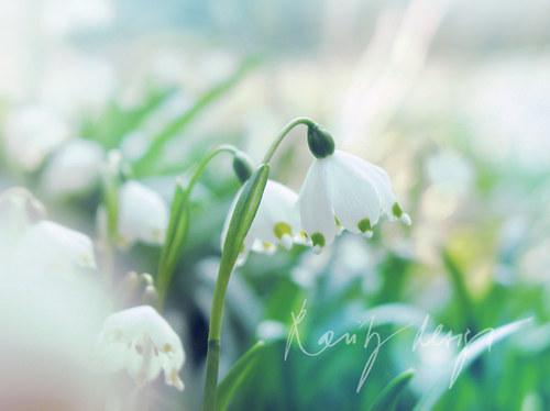 Spring X.