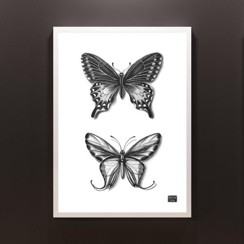 Tisk z originální kresby  - Ornithoptera paradisea