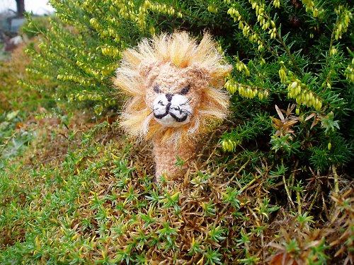 Lev - král džungle