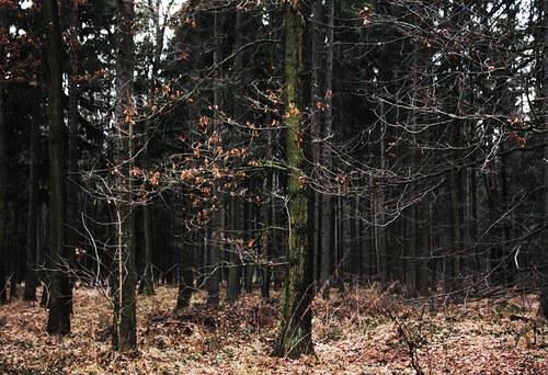 V pohádkovém lese