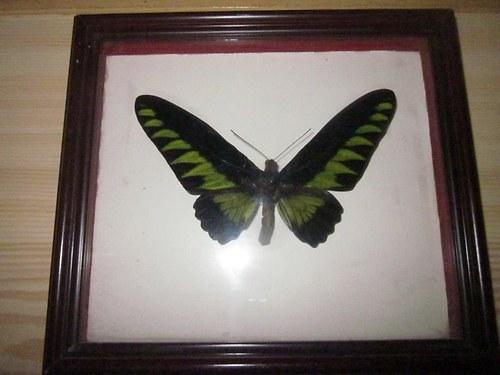 Obrázek s motýlem