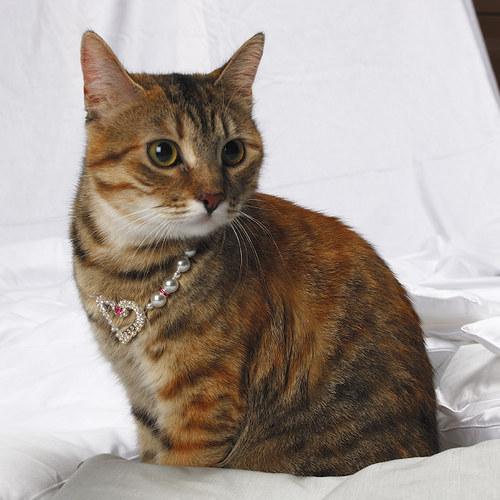 Pro kočičí princezny