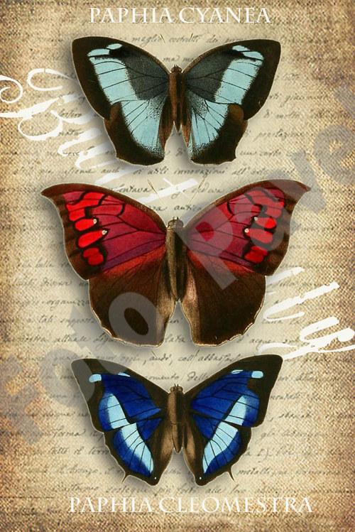 Vintage motiv - tři motýci 2