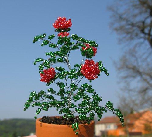 Světlečervené korálkové růže