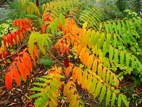 barví se listí
