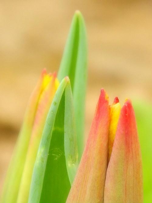 Barvy jara