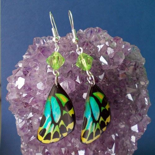 Náušnice motýl - mot14