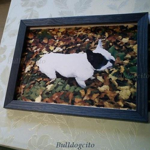 Buldoček v listí...obrázek