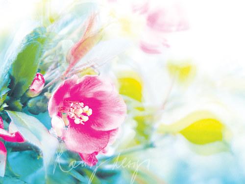 Spring VII.