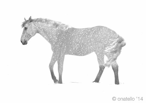 Equine Element - Snowfall