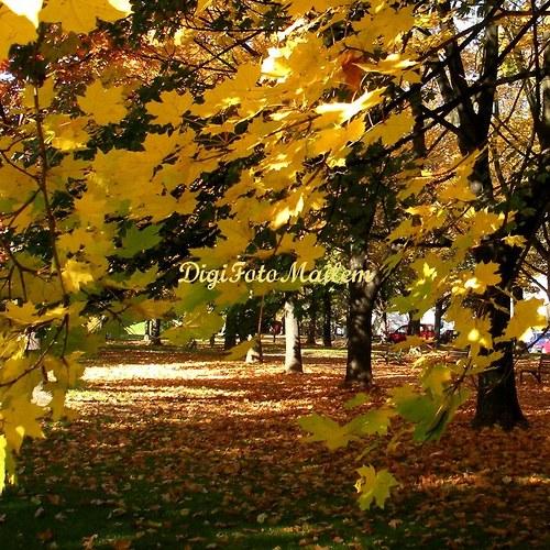 Krásný podzim II