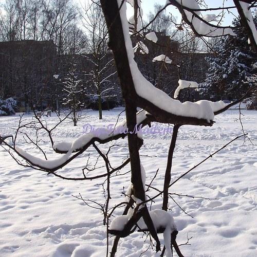 Zima v městském parku I