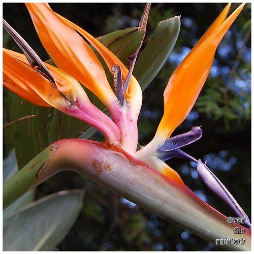 Africké květy - autorská fotografie, triptych
