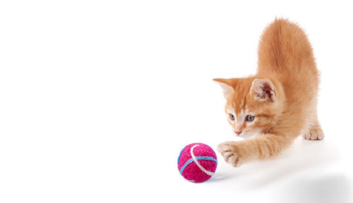Kulička pro kočku s kozlíkem - Frozen růžová