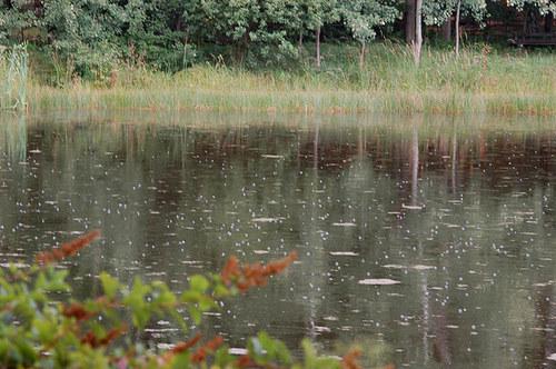 Prší do rybníka 2