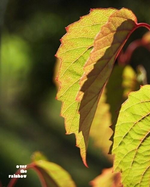 Autumn Impressions VI - autorská fotografie