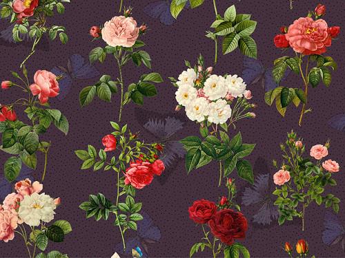 růže Redouté (5) (autorská látka)