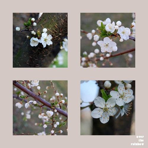 Rozkvetlá - sada 4 autorských fotografií