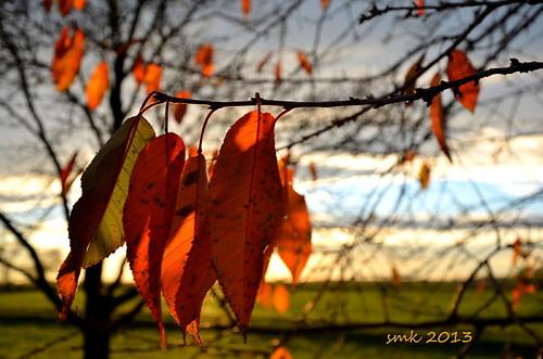 Oranžová v říjnu  - autorská fotografie