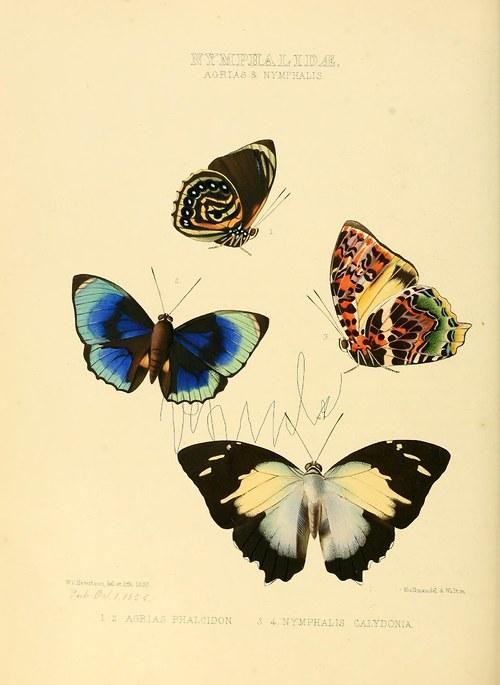 Motýli V