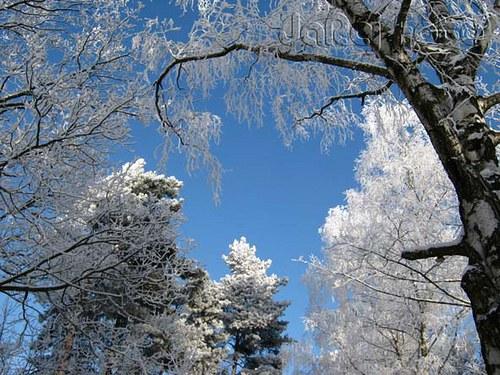 Zimní větvoví