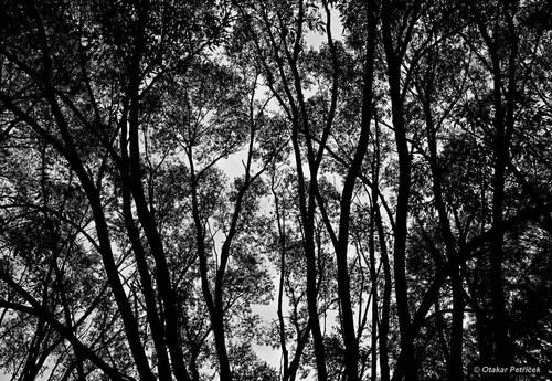 Ve větvích
