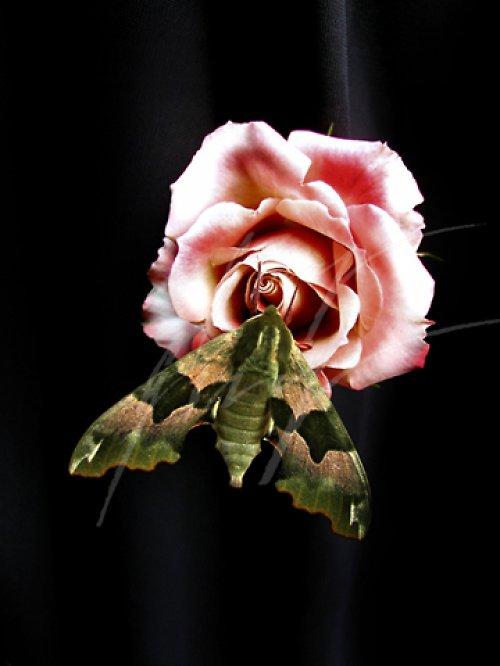Lyšaj Lipový a růže..