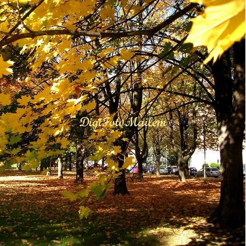Krásný podzim III