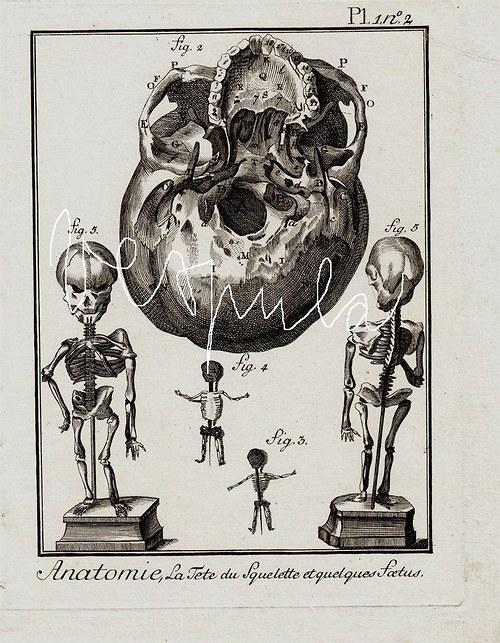 anatomie , lebka III