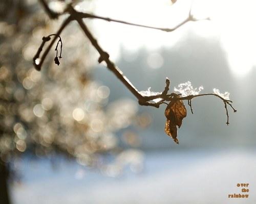 Winter Impressions V - autorská fotografie