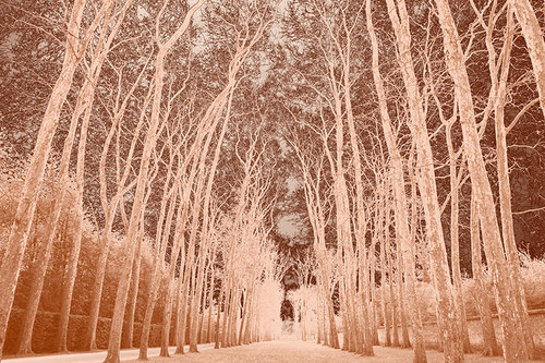 Stromořadí - grafika