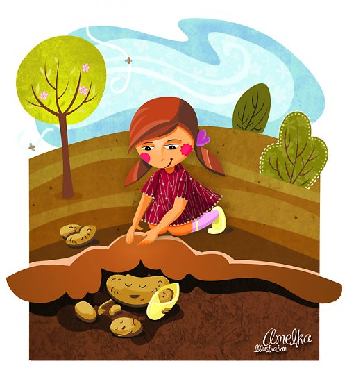 Životní pouť brambory