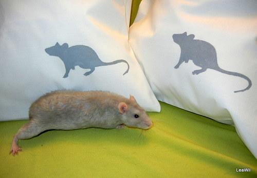 Polštář myš/potkánek