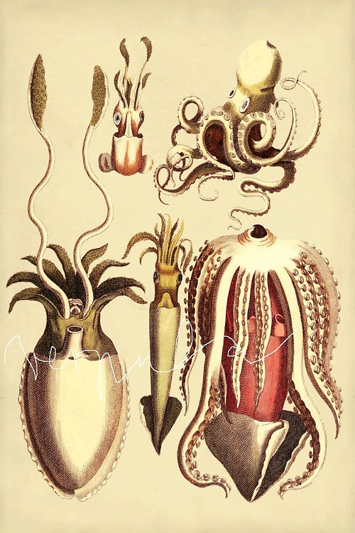 Krakatice