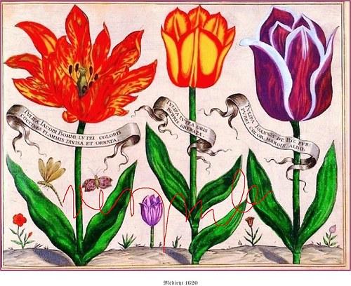 Botanika 1620-II