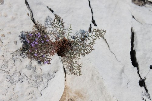 Když kameny kvetou
