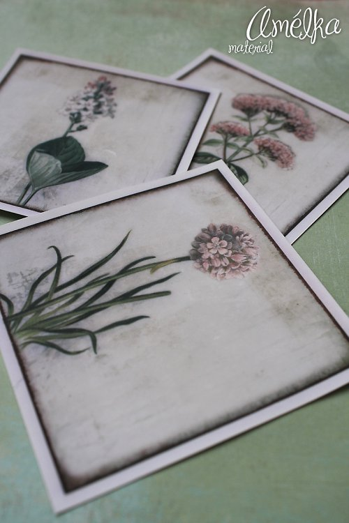 Nažehlovačky z Botanického atlasu - sada 1