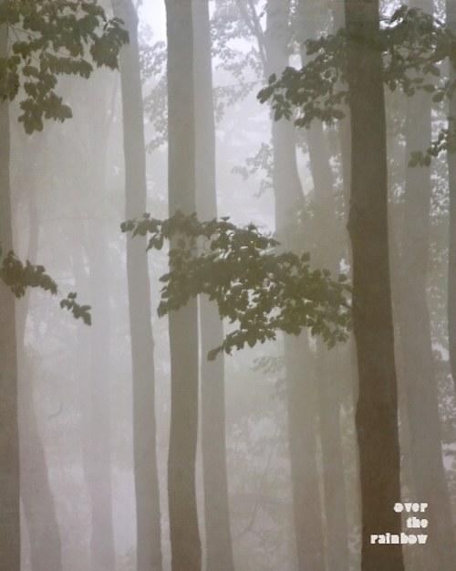 Mysterious forest II -autorská fotografie, Giclée