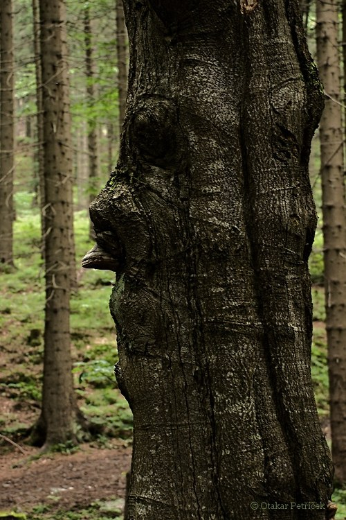 Lesní motivy VIII