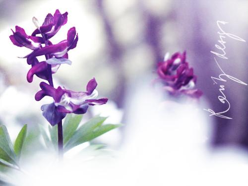 Spring VIII.