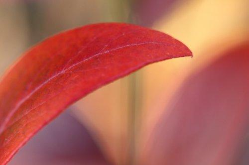 Barvy podzimu III