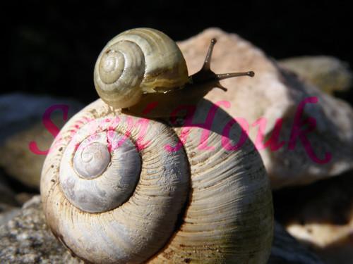 Snail Mail - Taxi Šnek - Kamarádi jak se patří